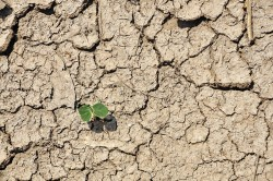 Drought resiliency grant awarded by the USBR