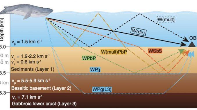 Whales imaging the ocean crust?